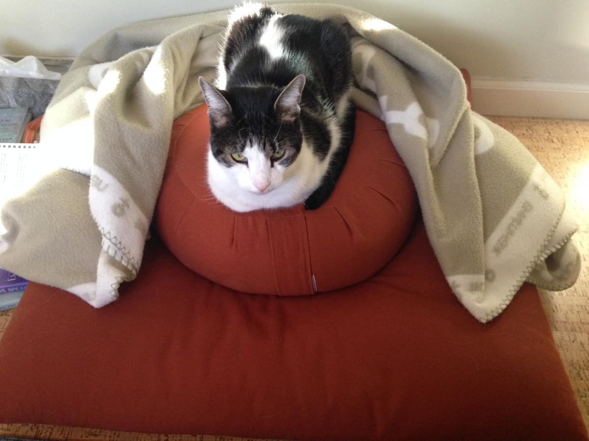 Meditation, Chanting & Cats OhMy!